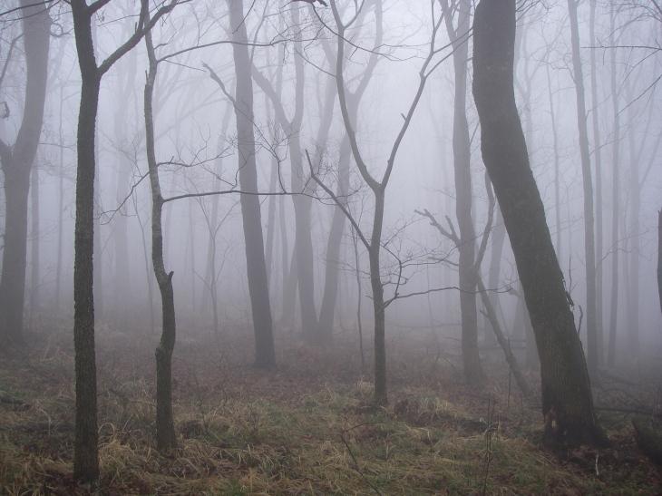 Foggy morning on the Ozark Highlands Trail
